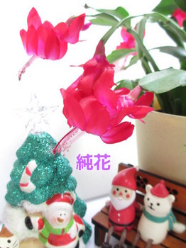 KzUyt2OLfK_RLO31417927438_1417927488.jpg