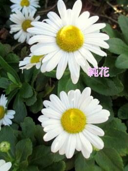 PoK9_KXYBT_FqYQ1382863680_1382863730.jpg